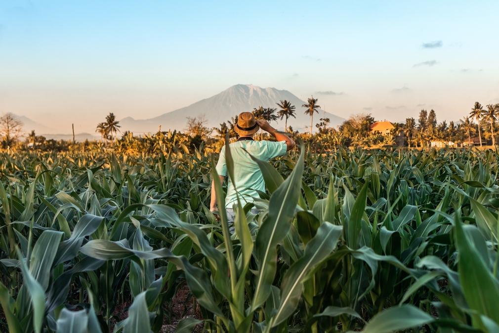 Man exploring tropics