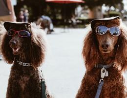 dog-with-sunglasses